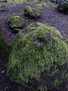 Is there a good recipe for moss soup??