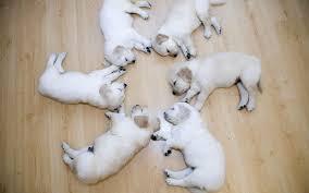 Synchronized canine savasana