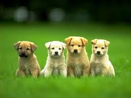 Puppies!! Sunshine!!